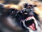 Челябинца покусала его собственная собака, мужчина погиб