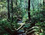 В Челябинской области почти сутки искали пропавшего в лесу мальчика