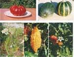 В семенах, поступивших на Южный Урал, не обнаружено ни одного вредителя