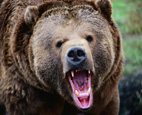 """Российская оппозиция ждет драки двух медведей, в результате которой """"берлога освободится"""""""