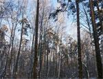 В Челябинской области ищут пенсионера, который ушел в лес и не вернулся