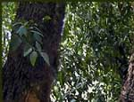 Южноуральские спасатели ищут в лесах пенсионерку и 19-летнего парня