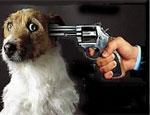 Южноуральца оштрафовали за избиение собаки на глазах маленького ребенка