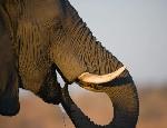 Нельзя убивать слона за то, что он большой / Специалист ФАС открестился от антимонопольной поправки к закону о торговле