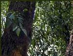 Из-за ЧП под Карабашом южноуральцам запретили гулять в лесу