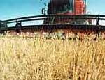 В Челябинской области собрали 1 миллион тонн зерна и 90 тонн картофеля