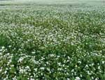 Южноуральские депутаты озаботились возвращением земель в сельхозоборот