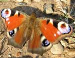 Из челябинской канализации вылетают бабочки