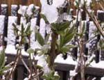 На Южный Урал возвращается зима