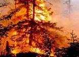 В 6 районах Южного Урала из-за частых пожаров вводится ограничительный режим