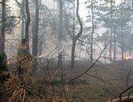 В Челябинске начали гореть городские леса