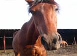 На Южном Урале вину в ДТП уже сваливают на трагически погибших лошадей