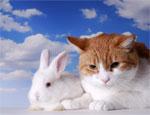 Новый год 2011: не гоняйте котов, не стреляйте в белых зайцев