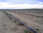 Южноуральские власти просят российский Минсельхоз пересчитать объемы топлива для весеннего сева / Дешевого горючего хватит только на половину посевной
