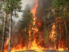 Площадь природных пожаров в России выросла в 3,3 раза / Самая сложная ситуация – в Ямало-Ненецком и Ханты-Мансийском АО