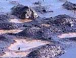 В челябинском поселке произошел разлив нефти
