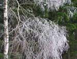 На Южном Урале ожидаются ночные заморозки и гололед