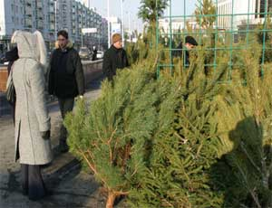 В Магнитогорске откроется 50 елочных базаров
