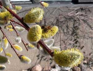 Весна на Южный Урал придет лишь в апреле / Настоящее тепло ожидается со второй половины месяца