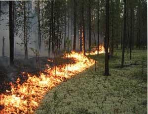 Ежедневно челябинские пожарные 150 раз выезжают на тушение травы / Горят сады, газоны и кладбища