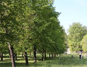 В Ленинском районе Челябинска благоустраивают скверы (ФОТО) / И собираются создать собственный парк отдыха