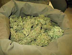 В Миассе задержали контрабандиста-дальнобойщика, доставлявшего марихуану из Казахстана