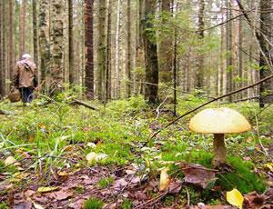 На Южном Урале 38-летняя автоледи попала в грибной плен / Пришлось вызывать спасателей