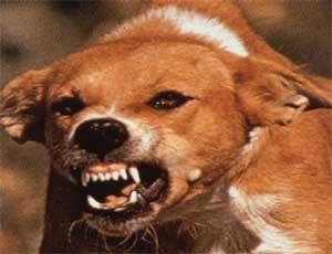 На Южном Урале бойцовая собака загрызла женщину