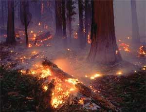 В УрФО огнем повреждено более 1 тысячи гектаров леса