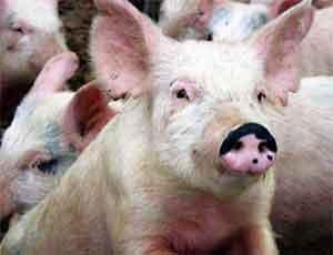 Челябинская область ощутила первые последствия вступления России в ВТО / Губернатор Юревич: Разорения части мясных хозяйств не избежать (ВИДЕО)