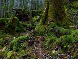 К поискам заблудившихся в южноуральском лесу женщины с ребенком привлекут курсантов, собак и два самолета