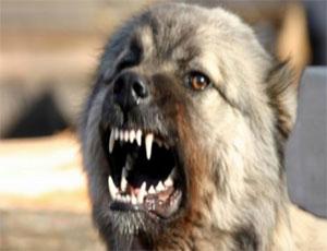Житель Еманжелинска не выпускал из своей квартиры врача скорой помощи, угрожая натравить собаку