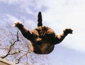 Челябинец выбросил кошку своей жены с балкона / Возбуждено уголовное дело