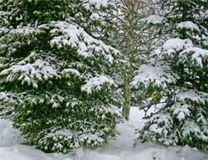 Под Миассом двое мужчин в мороз застряли в лесу