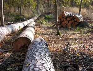В Еманжелинске управляющая компания за счет жильцов компенсировала расходы на незаконную рубку деревьев