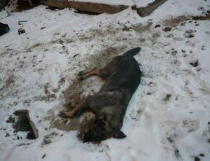 В якутске неизвестные устроили бойню