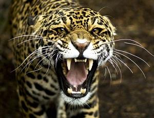 В цирке подольска леопард напал на