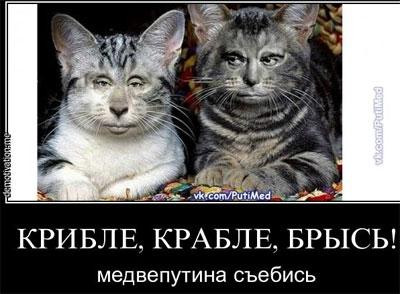 """Бегите из """"Новороссии"""": зимой там будет ад, - депутат Донецкого облсовета - Цензор.НЕТ 6265"""