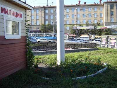 В центре Челябинска обнаружены посадки конопли (ФОТО)