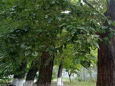 Один из районов Челябинска попал под действие неопознанного атмосферного явления (ФОТО) / Пострадали и люди, и животные, и растения