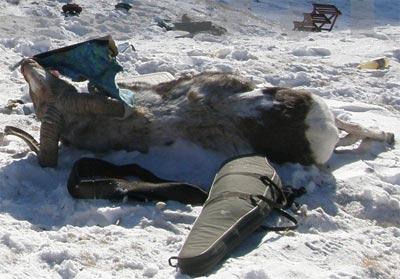 Новый Регион: Кремлевских чиновников на Алтае погубила браконьерская охота? (ФОТО)
