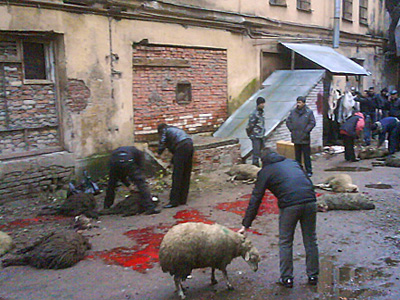Все выходные в Москве и Питере резали баранов (ФОТО) / Милиция проигнорировала жалобы жителей, шокированных кровью